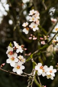 Dekoracja kwitnącego drzewa na zewnątrz