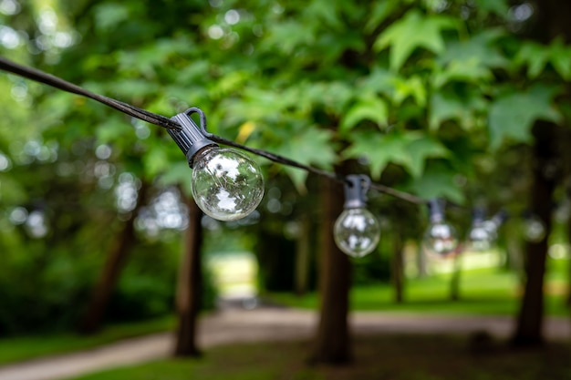 Dekoracja na imprezę na świeżym powietrzu, girlanda żarówek zawieszonych między drzewami