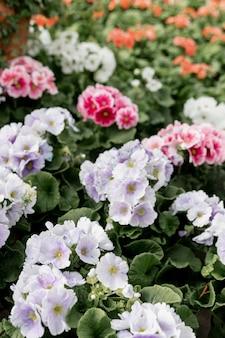 Dekoracja pięknych kolorowych kwiatów