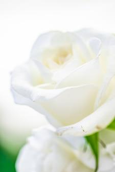Dekoracja ślubna wystrój stołu i kwiatowy bukiet piękności z białych róż w luksusowej restauracji beautif...