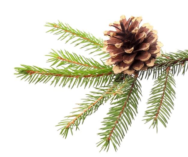 Dekoracja świąteczna - gałązka jodły ze złoconym stożkiem, izolacja na białym tle