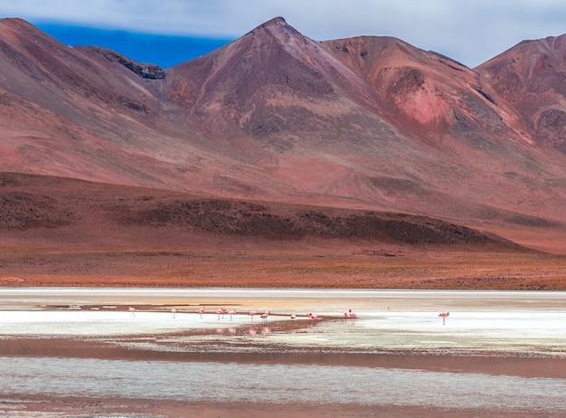 Dekoracje flamingów na lagunie