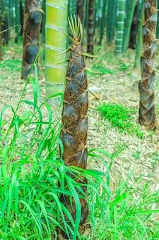 Dekoracji chińskich drzew tropikalnych spokojne