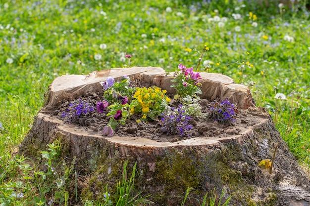 Dekoracyjna klomb z kwiatami na pniu w ogrodzie