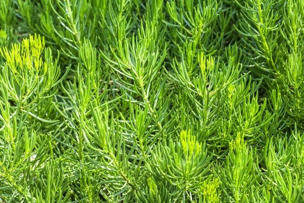 Dekoracyjna zielona trawa, imitująca gałązki jodły, makro.