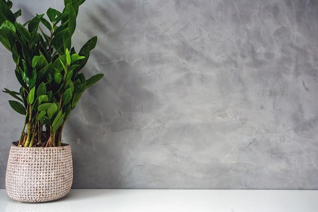 Dekoracyjna zielonego domu roślina blisko betonowej ściany