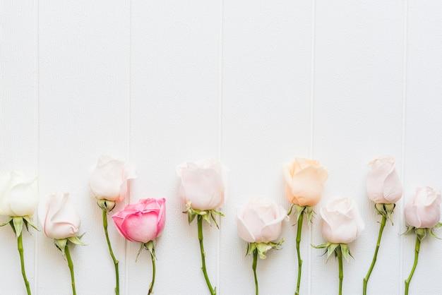 Dekoracyjne kolorowe róże na tle