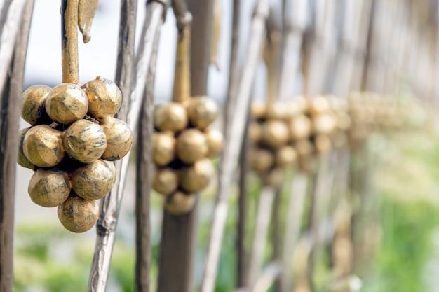 Dekoracyjne kucie ogrodzeń. element kiści winogron z bliska.