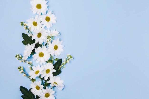 Dekoracyjne kwiaty stokrotki