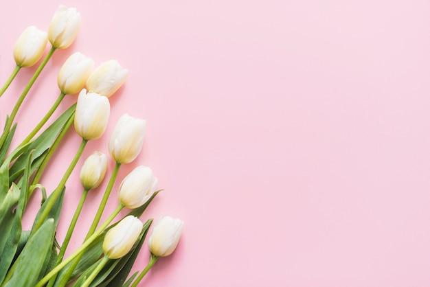 Dekoracyjne kwiaty tulipanów na kolorowe tło