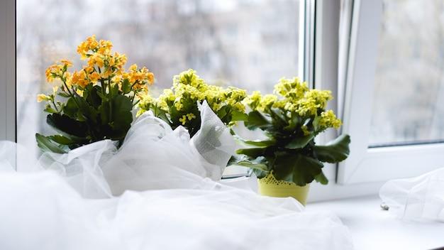 Dekoracyjne żółte kwiaty w doniczce na parapecie