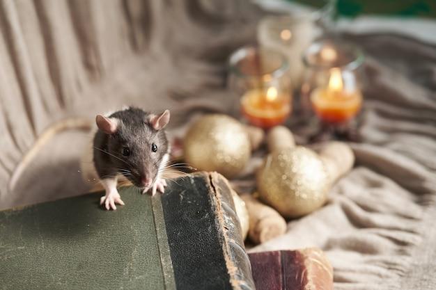 Dekoracyjny czarno-biały szczur wśród świątecznych zabawek i świec