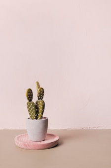 Dekoracyjny kaktus w minimalnej wazonie