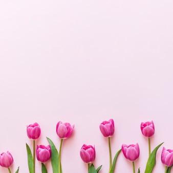 Dekoracyjny kolorowy tulipan kwitnie na tle