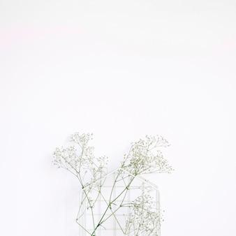 Dekoracyjny tło z białym kwiatem