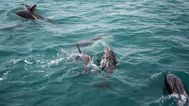 Delfin w nowej zelandii