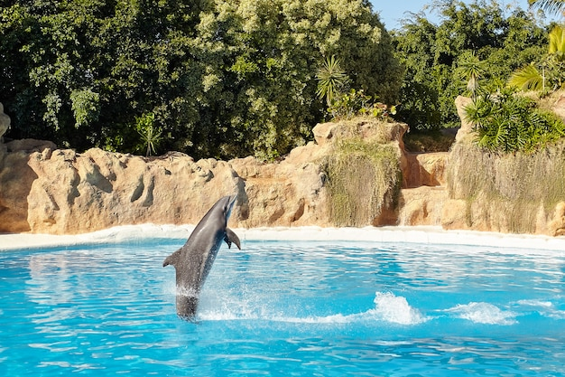 Delfin wyskakuje z wody.