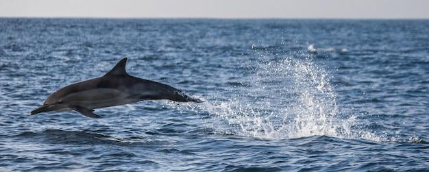 Delfin wyskakuje z wody