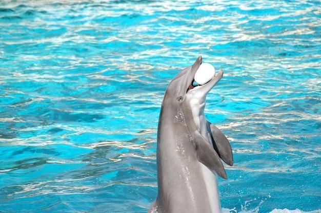 Delfin z piłką