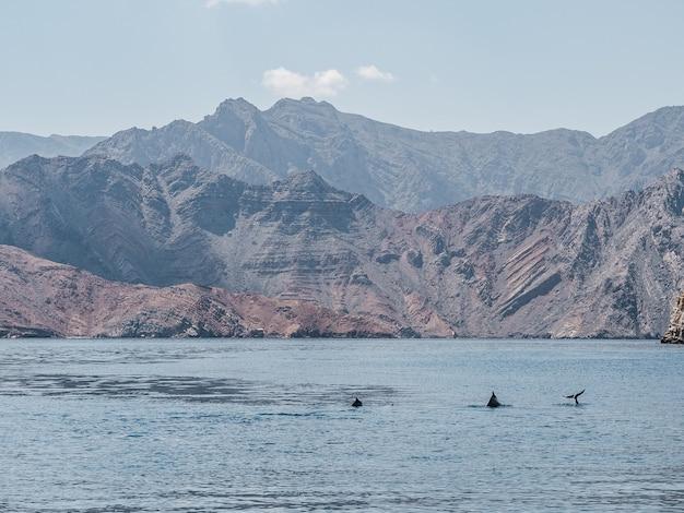 Delfiny pływające w falach morskich. oman fiordy
