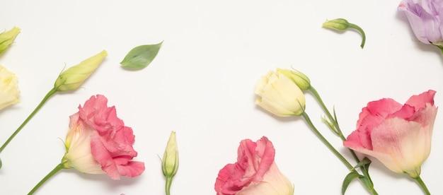 Delikatne eustomy różowe, lilie i kremowe na białym tle. transparent. ramka kwiatowy i kopia przestrzeń. dzień matki i dzień kobiet