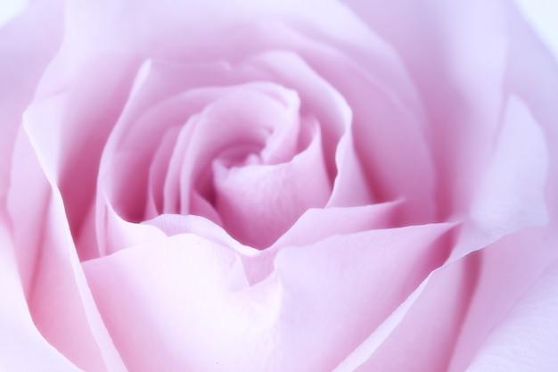 Delikatne niewyraźne różowym tle róży