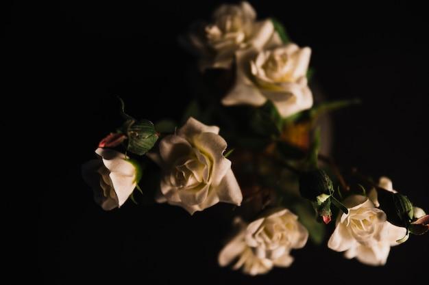 Delikatne róże w doniczce