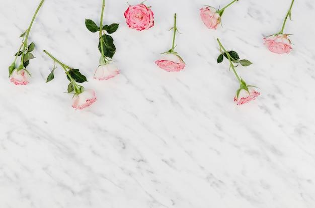 Delikatne różowe kwiaty z miejsca na kopię