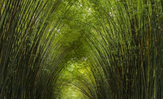 Delikatność wierzchołków bambusa na tle