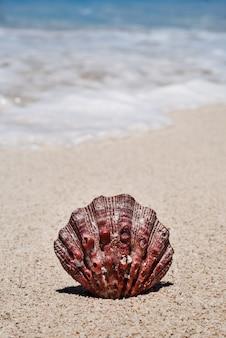 Denna skorupa z piaskiem na seashore cancun, meksyk
