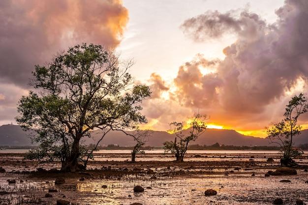 Denny zmierzch lub wschód słońca z drzewem i kolorowy niebo i chmura w zmierzchu