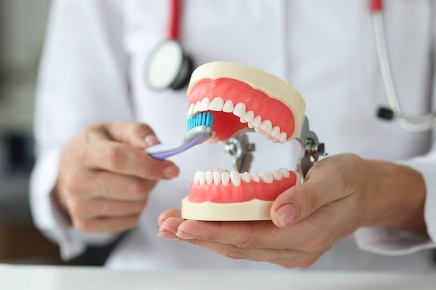 Dentysta trzyma szczękę i pokazuje, jak prawidłowo myć zęby szczoteczką do zębów poprawny doustny