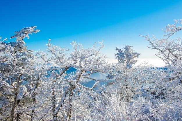 Deogyusan zimą w korei