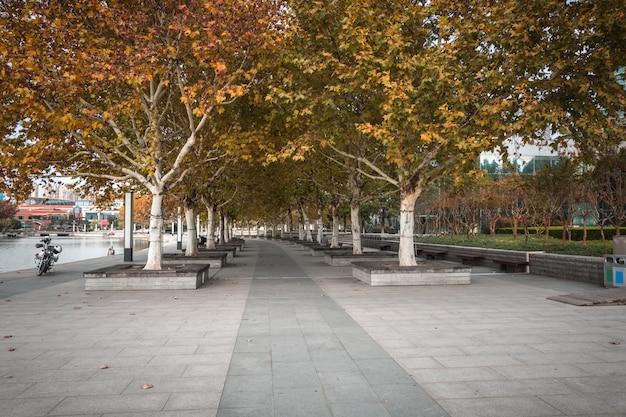 Deptak w pięknym parku miejskim