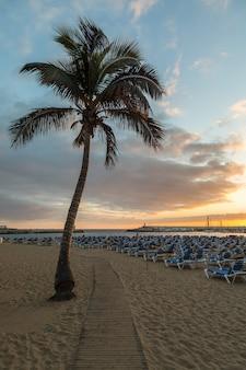 Deska spacer między drzewkiem palmowym i sunbeds przy puerto rico plażą w gran canaria, hiszpania.
