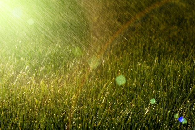 Deszcz jest na trawie