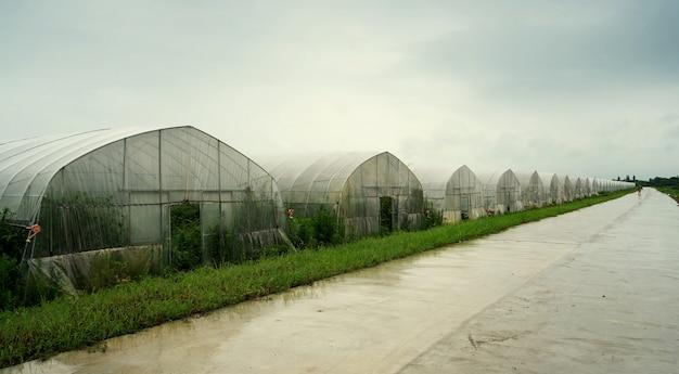 Deszcz w szklarni materiału