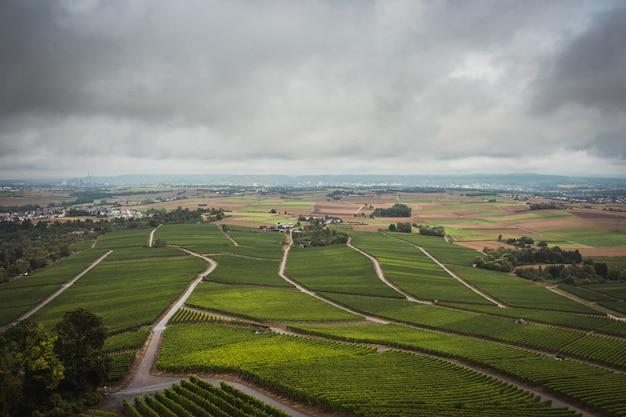 Deszczowego dnia widok wina pola w stuttgart niemcy