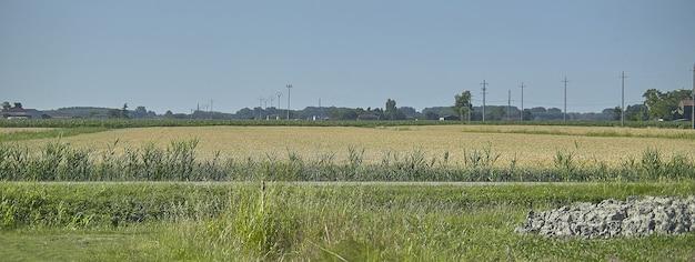 Detal krajobrazu wiejskiego, obraz banera z miejscem na kopię