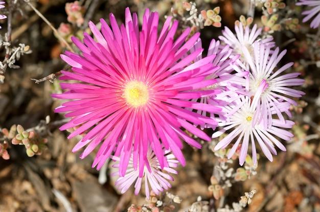 Dewflowers