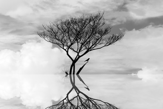 Die tree in the water art fotografia abstrakcyjna