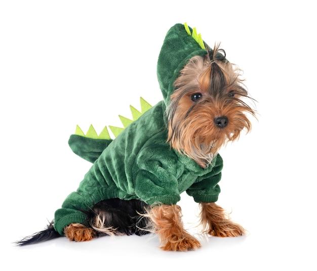 Dinozaur yorkshire terrier