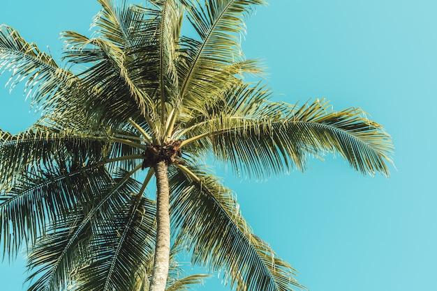 Dłoń drzewo na niebie