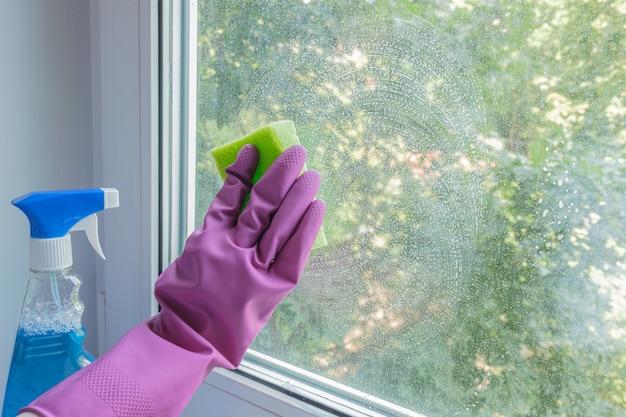 Dłoń kobiety w liliowej gumowej rękawiczce myje szybę gąbką i środkiem czyszczącym w pokoju