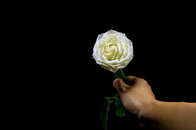 Dłoń trzymająca białą różę na czarnym tle