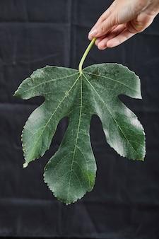 Dłoń trzymająca liść figowy w ciemności.
