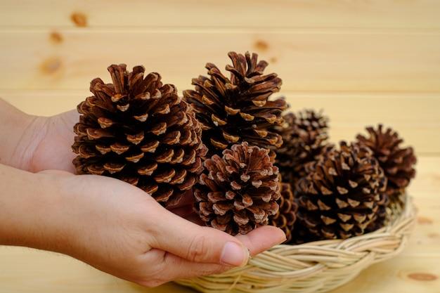 Dłoń trzymająca suche szyszki sosnowe tło jest drewnianą ścianą