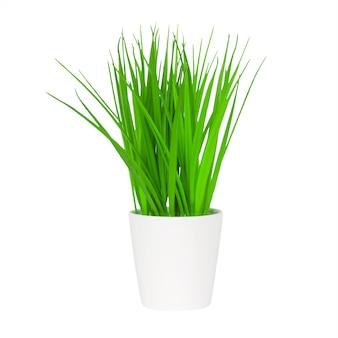 Długa zielona trawa w białej doniczce na białym tle