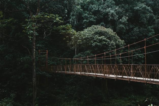 Długi baldachimu mostu przejście w lesie