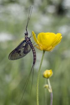 Długi owad siedzący na zielonej roślinie